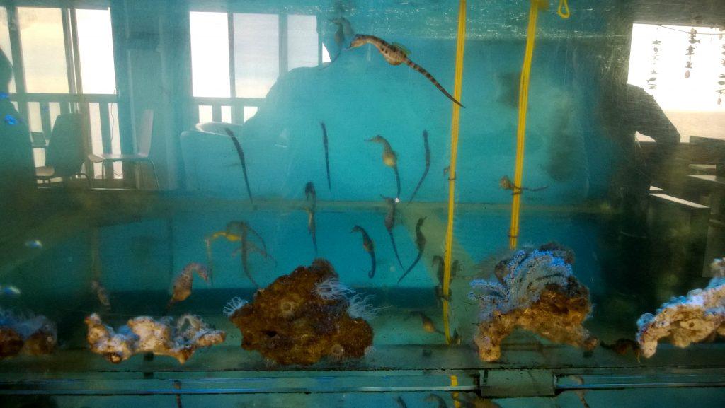 Seahorse Museum