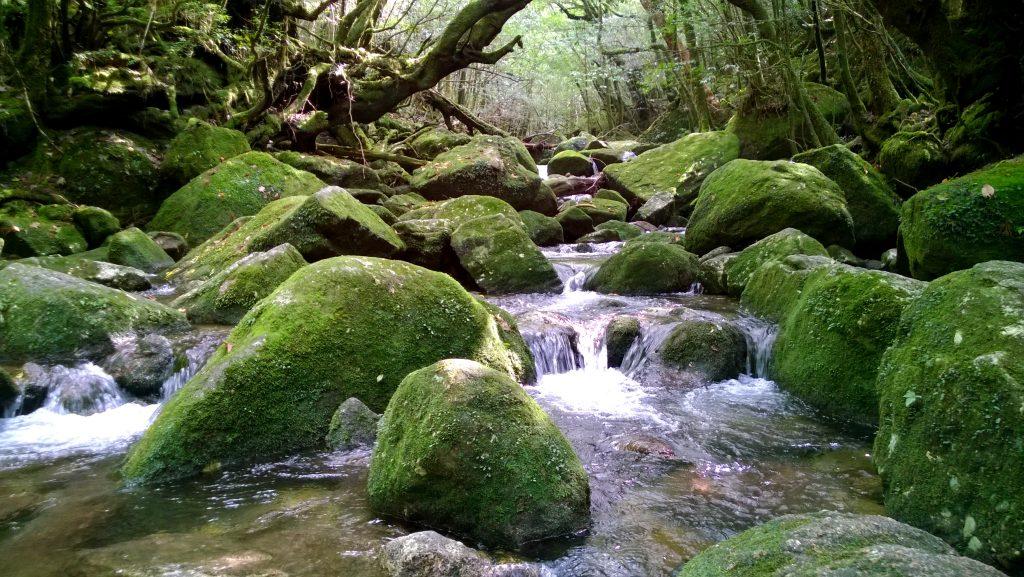 Primal river