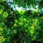 Kankakei Gorge - Sky of Green