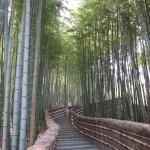 Arashi - foret de bambous