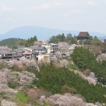 Cherry_blossoms_at_Yoshinoyama_01_Wikipedia_by_Tawashi2006