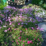 Fleurs à Ôboke